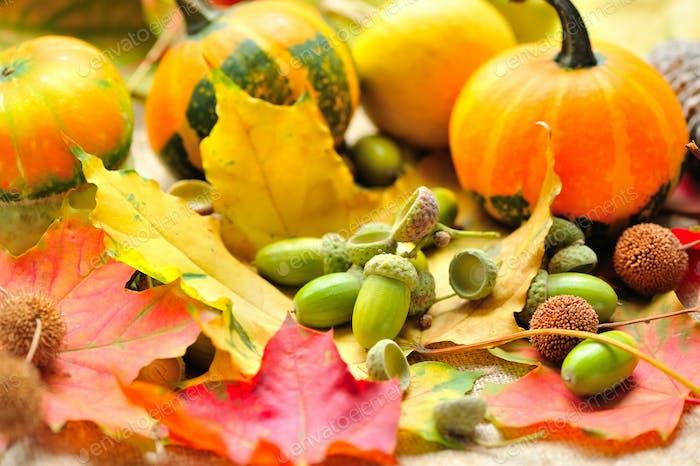 Mini dekorative Kürbisse mit Eicheln auf Herbstblättern