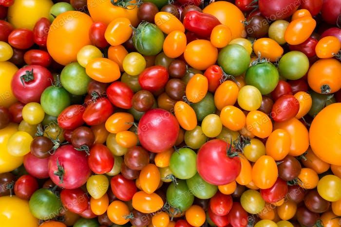 Bunte Vielfalt an Tomaten