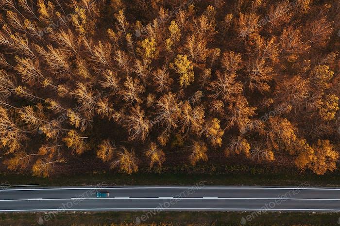 Verkehr auf der Straße durch den herbstlichen Espenwald