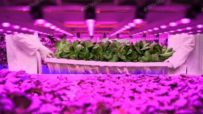 Unrecognizable workers on aquaponic farm, sustainable business