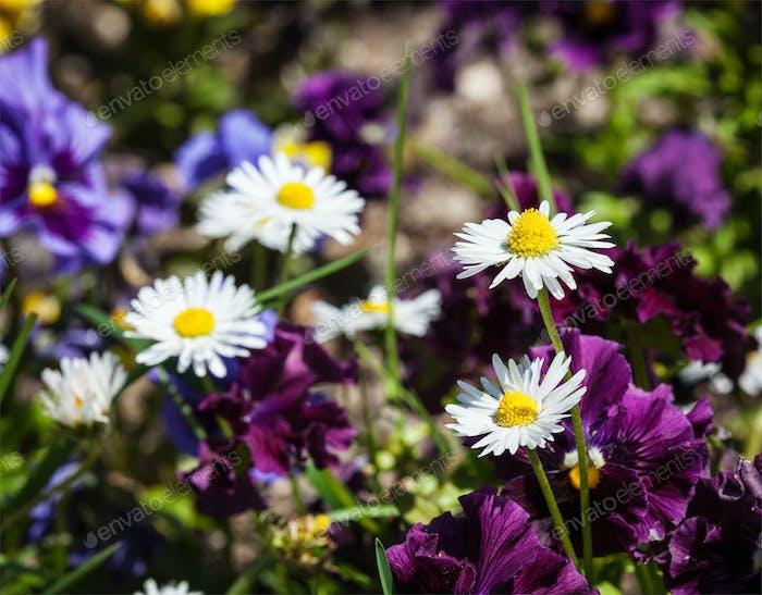 Blooming field flowers in spring