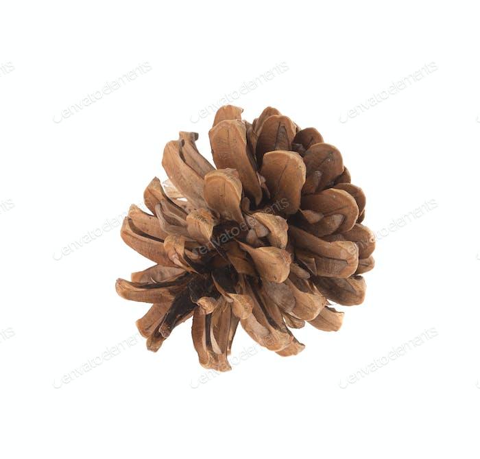 Dry cone of pine. Macro.
