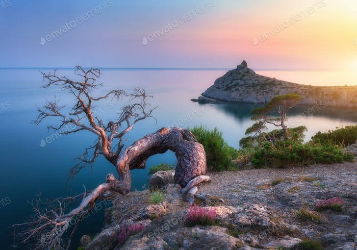 Amazing old tree growing out of the rock at sunrise