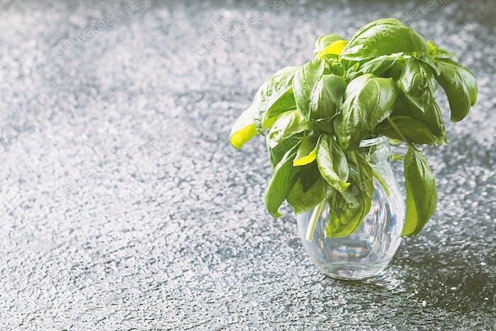 Fresh green basil plant