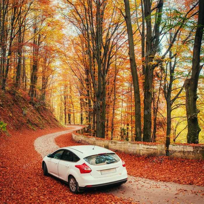 White car on a forest trail. Golden autumn