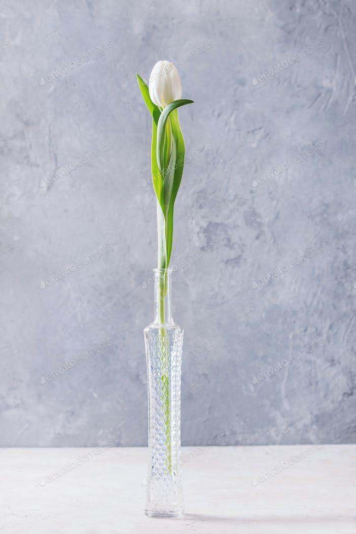 Weiße Tulpe in der Flasche