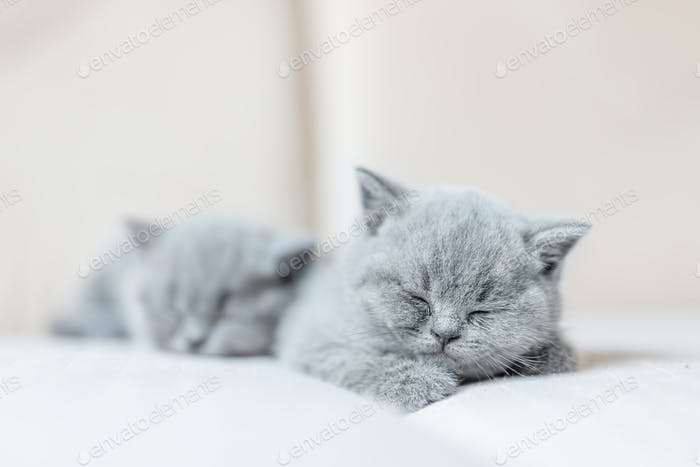 Cute tiny cat sleeping sweetly on his tummy.