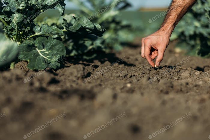 cropped shot of farmer sowing one seed in soil