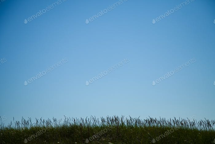Long grass silhouette with room for text