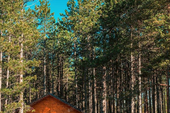 Cabaña de madera en pinar