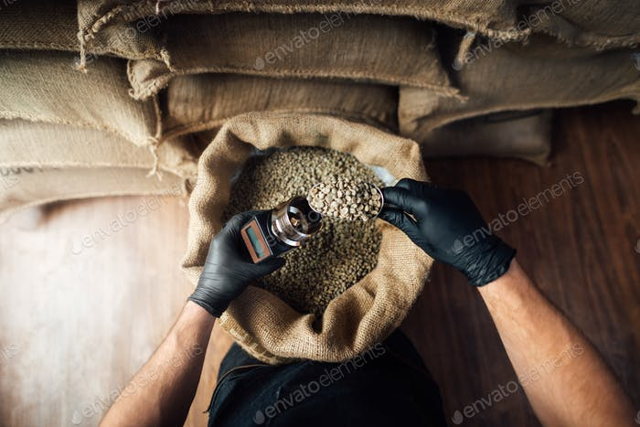 pouring coffee beans into a device for measuring humidity