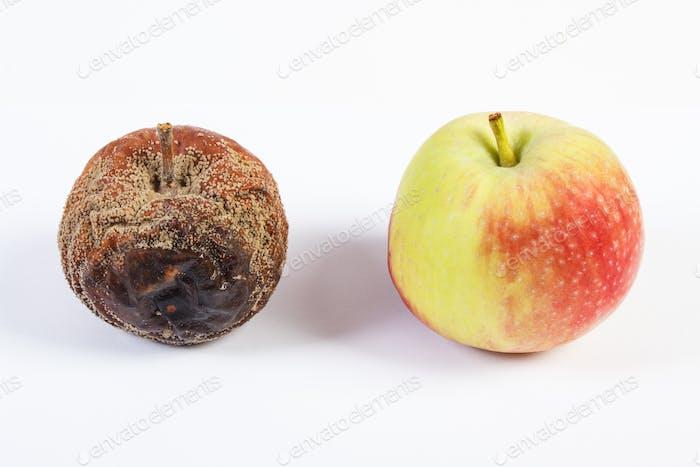 Manzana vieja arrugada mohosa y fresca sobre Fondo blanco