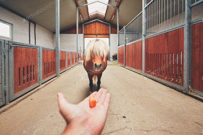 Miniature horse in the stable