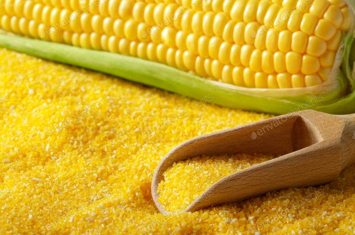 Ripe fresh organic sweet corncob with scoop closeup on grits bac