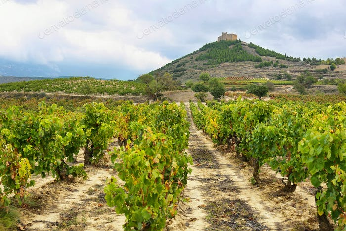Vineyards and Davalillo castle, La Rioja (Spain)