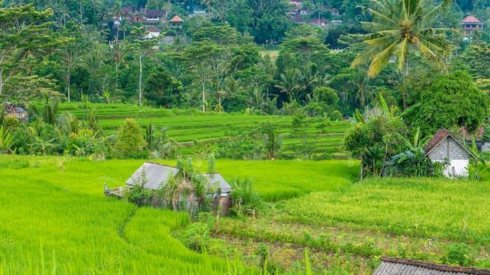 Lush green Rice tarrace in Sidemen. Bali, Indonesia