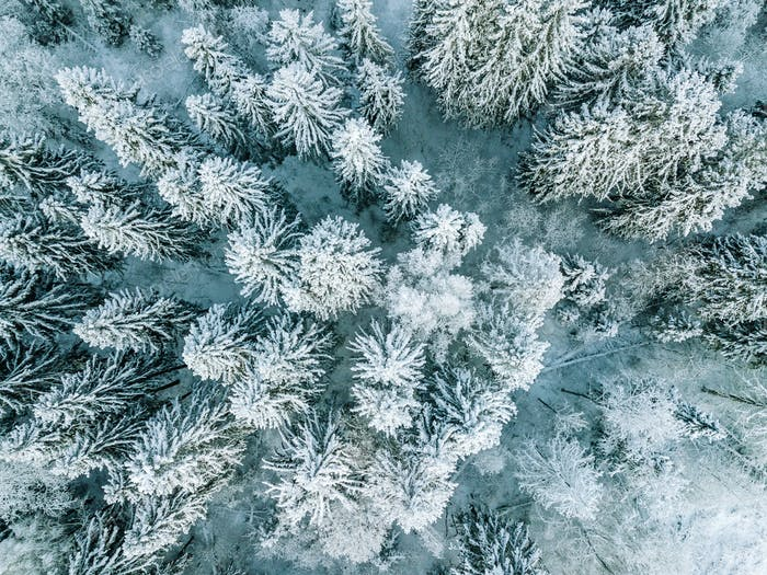 Aerial top view of snow covered winter  forest trees in Finland.