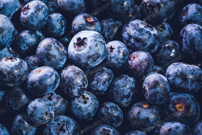Die Oberfläche ist mit einer dicken Schicht Blaubeeren bedeckt. Natürlicher Hintergrund. Vaccinium uliginosum Moor