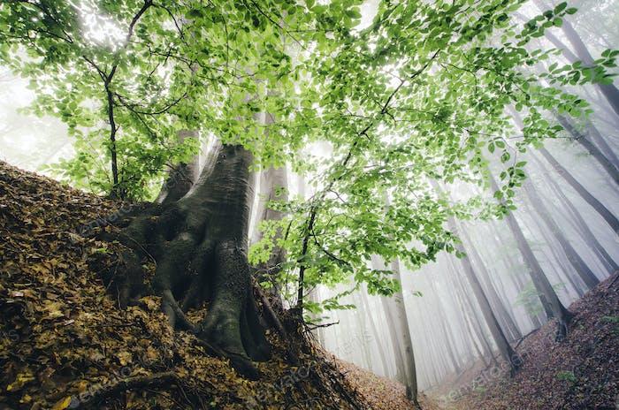 green leaves on tree in misty forest vivid landscape