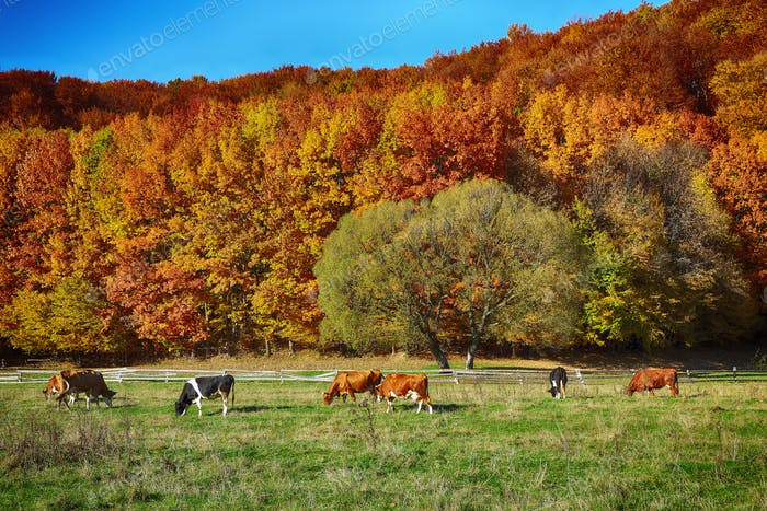 Country scenery on late autumn season