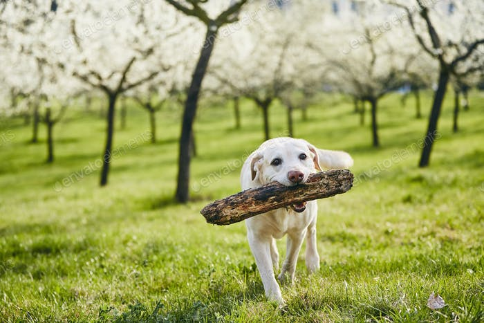 Cheerful dog in spring nature