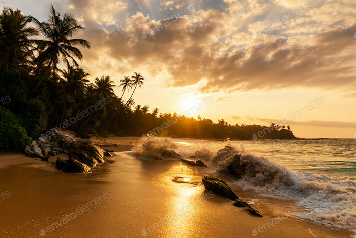 Beautiful sunset on the beach with palms on a Caribbean island
