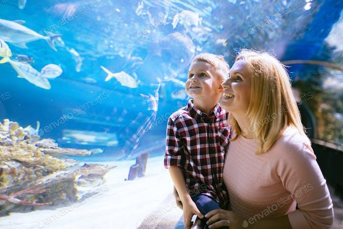 Mutter und Sohn beobachten Meeresleben im Ozeanarium