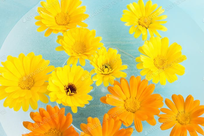Feng Shui, Marigold Flowers in a Water