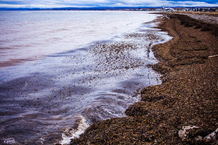 Seaweed Panorama of the Gaspe Peninsula