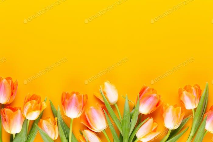 Желтые пастельные цвета тюльпаны на желтом фоне.
