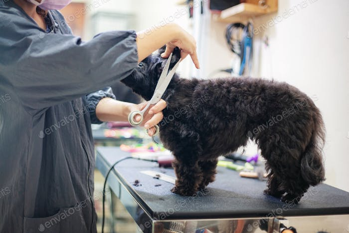 Frau schneiden Haare ein Hund in Zoohandlung