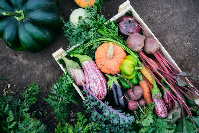 Different vegetables in a wooden box