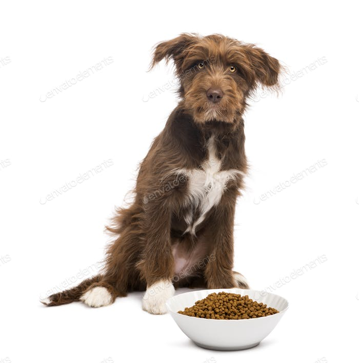Crossbreed, 5 months old, sitting behind a bowl full of dog food