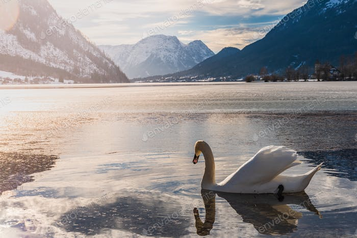 Clear Cold Landscape with blue sky at Grundlsee, Austria. Swans on lake winter, frozen lake