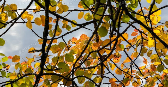 Autumn Colored Canopy