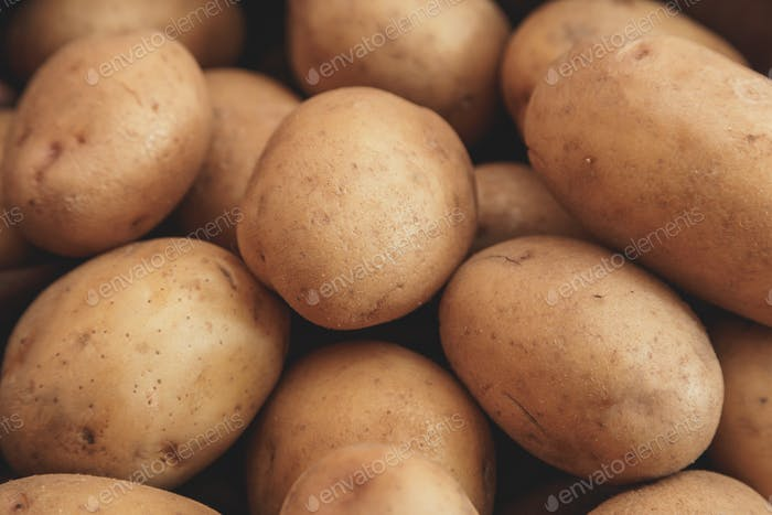 Close up of ripe raw potatoes