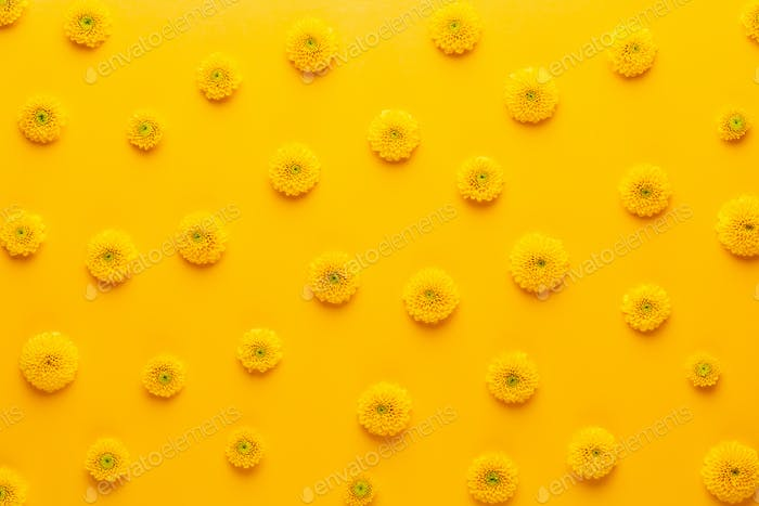 Yellow flower pattern on a yellow background.  Spring greeting card.