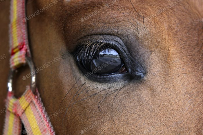 Eye close up of a brown horse