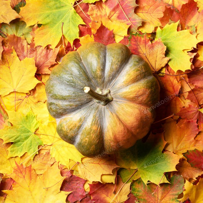 Big pumpkin on colorful fallen leaves background. Top view. Flat lay. Copy space for advertising