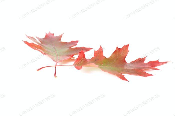 Herrliche bunte Blätter.