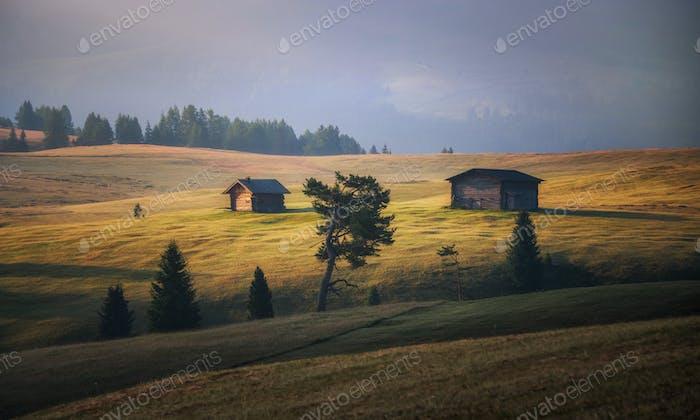 Schöner Sommertag in den Dolomiten auf den Wiesen