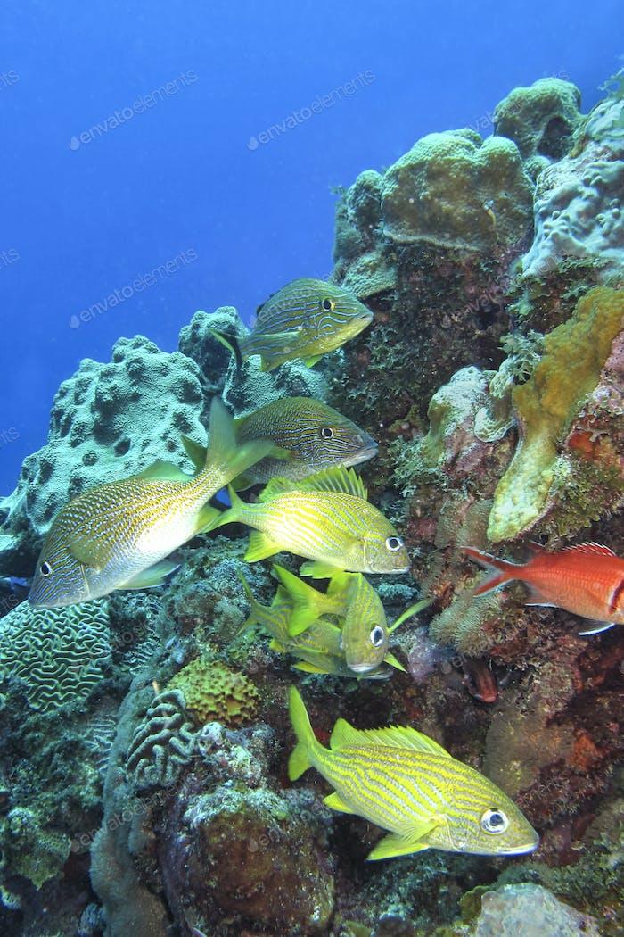 Coral Reef, Caribbean Sea, Isla de la Juventud, Cuba