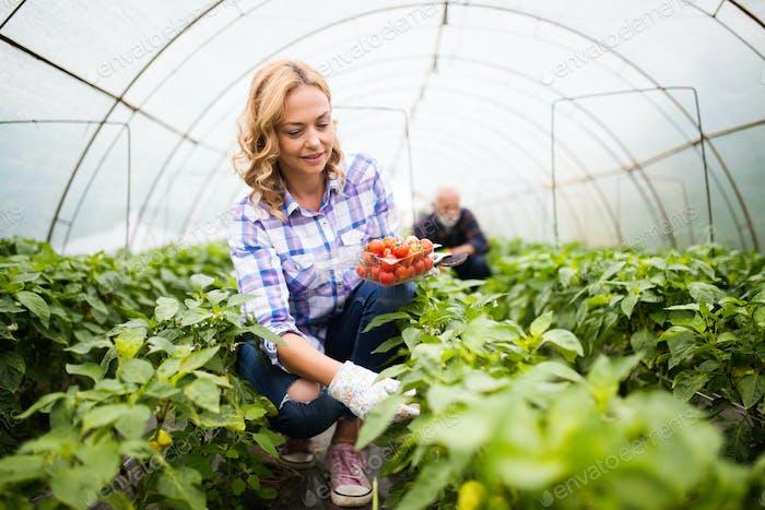 Happy woman farmer growing vegetables at farm