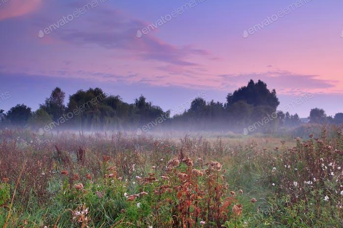 Mañana brumosa en el campo