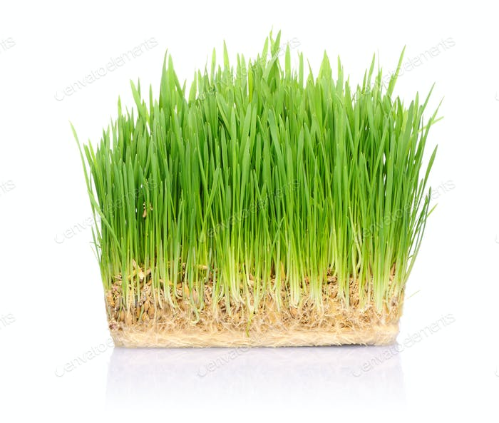 Grass in soil