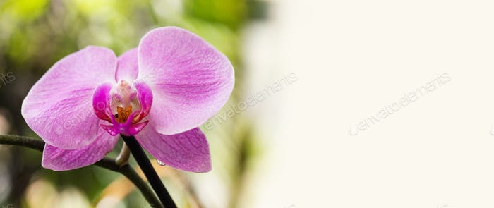 Beautiful purple Orchid flowers, macro view selective focus.