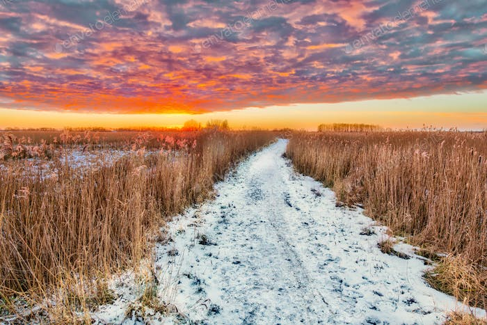 Winter landscape  pathway through marsh