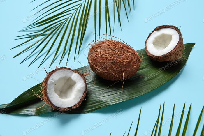 Different palm leaves and coconut on a blue background. Beautiful creative layout. Flat lay