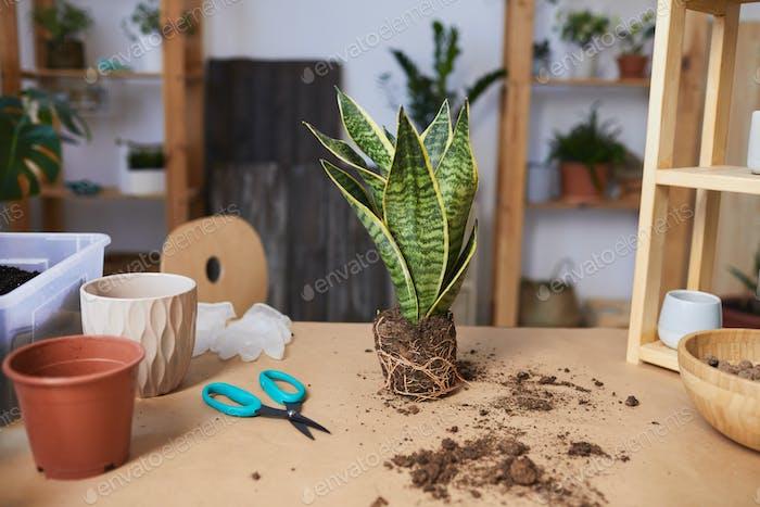 Indoor Houseplants Background