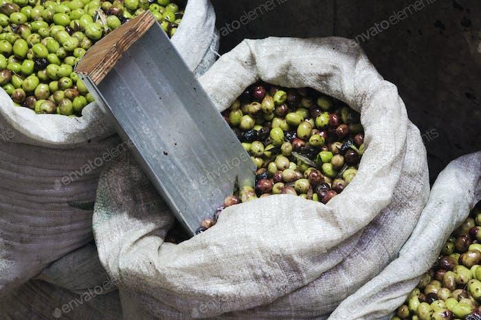 Grüne Oliven zum Verkauf